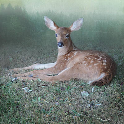 Poster featuring the photograph Mystic Fawn by Sally Banfill