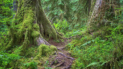 Mystic Journey - Hoh Rain Forest Poster by Stephen Stookey