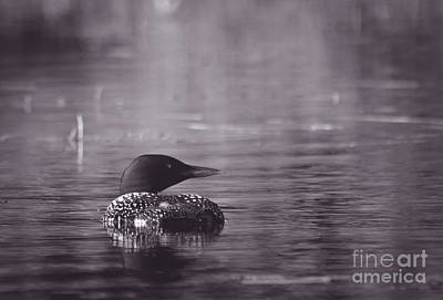 Mystical Loon Poster by Cheryl Baxter