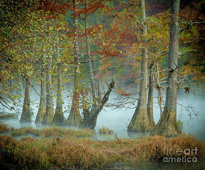 Poster featuring the photograph Mystical Mist by Iris Greenwell