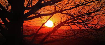 Naked Tree At Sunset, Smith Mountain Lake, Va. Poster