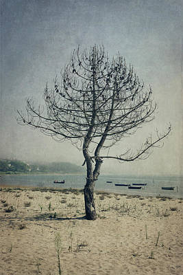 Poster featuring the photograph Naked Tree by Marco Oliveira