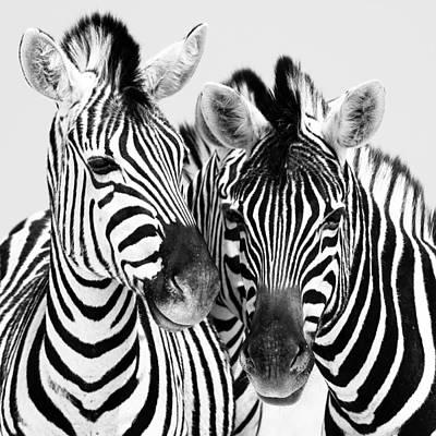 Namibia Zebras Iv Poster by Nina Papiorek