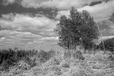 National Park Dwingelderveld, Netherlands. Black And White. Poster