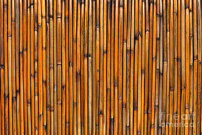 Natural Bamboo Background Poster