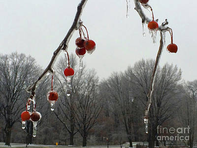 Natural Ornaments In A Frozen Landscape Poster