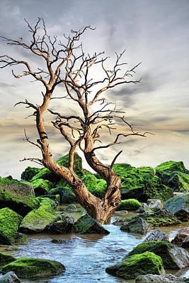 Poster featuring the photograph Natural Surroundings by Angel Jesus De la Fuente