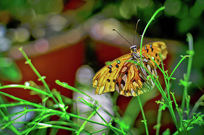 Nature - Butterfly And Plants Poster