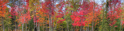 Poster featuring the photograph Natures Autumn Palette by David Patterson