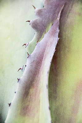 Poster featuring the photograph Nature's Desert Abstract One by Julie Palencia