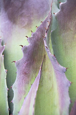 Poster featuring the photograph Nature's Desert Abstract Two by Julie Palencia