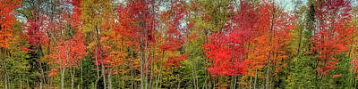Poster featuring the photograph Natures Fall Palette by David Patterson