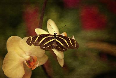 Natures Flutter Poster by Karol Livote