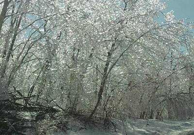 Poster featuring the photograph Nature's Frosting by Ellen Levinson