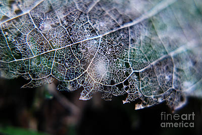 Nature's Lace Poster