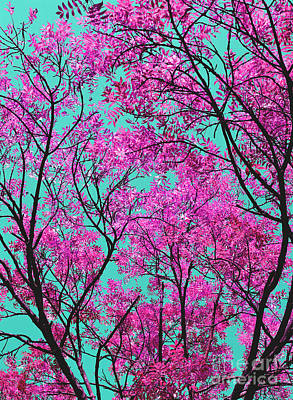 Natures Magic - Pink And Blue Poster by Rebecca Harman