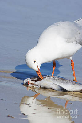 Natures Pecking Order Poster