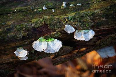 Poster featuring the photograph Natures Ruffles - Cascade Wi by Mary Machare