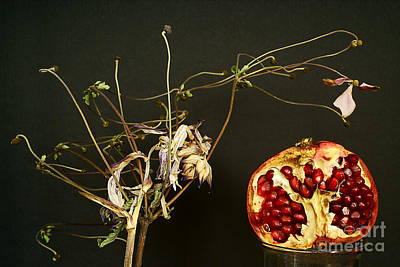 Naturmort With Pomegranate. Poster