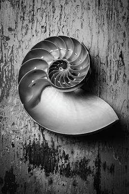 Nautilus In Black And White Poster by Garry Gay