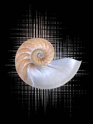 Nautilus Seashell Abstract - Vertical Poster