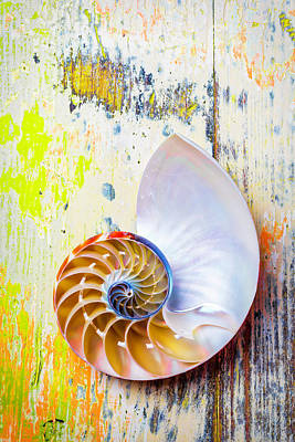 Nautilus Shell On Old Board Poster