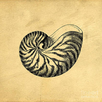 Poster featuring the digital art Nautilus Shell Vintage by Edward Fielding