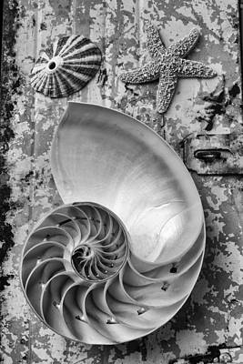 Nautilus Shell With Starfish Poster by Garry Gay