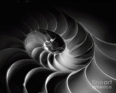 Nautilus Spiral Poster by George Oze