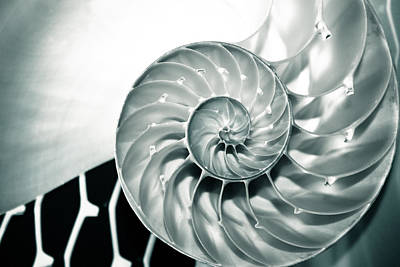 Nautilus Wave Poster by Colleen Kammerer
