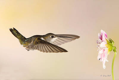 Poster featuring the photograph Nectar Seeking Missile by Gerry Sibell