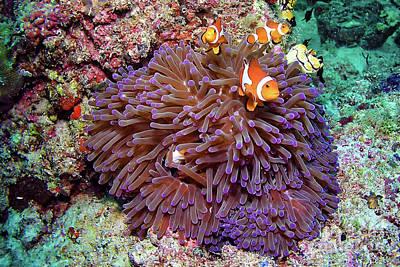 Nemo's Home Poster