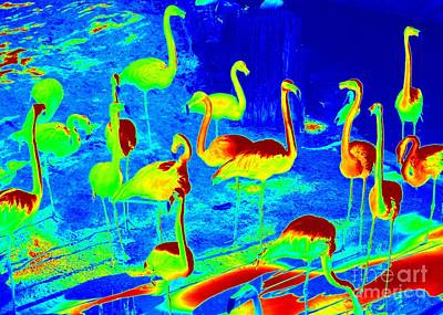 Neon Flamingos Poster by Carol Groenen