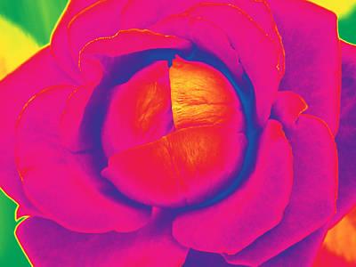 Neon Lettuce Rose Poster