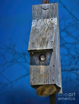 Nest Box In The Spring Poster by Henry Kowalski