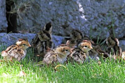 Nevada Chicks Poster