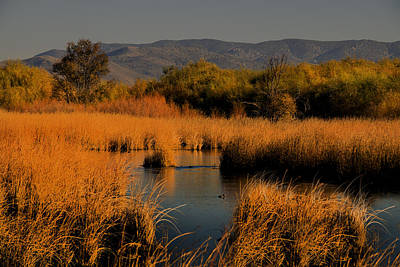 Nevada Marshlands At Sunset Poster by Frank Wilson
