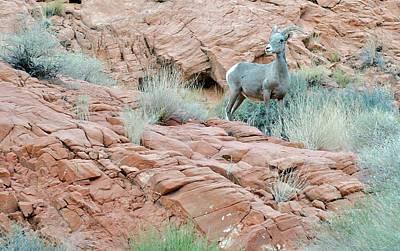 Nevada Rocks 31c Poster