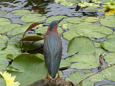 Nevis Bird Observes Poster