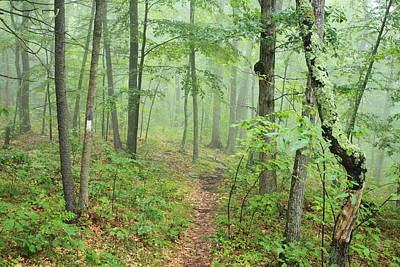 New England National Scenic Trail Misty Forest Poster