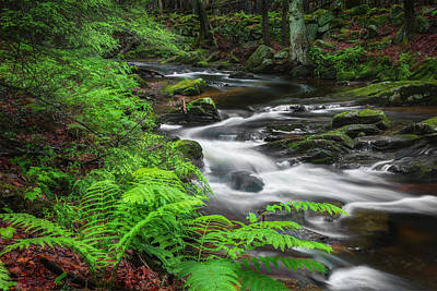 New England Spring Stream Poster by Bill Wakeley