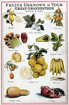 New Fruits, C1950s Poster by Granger
