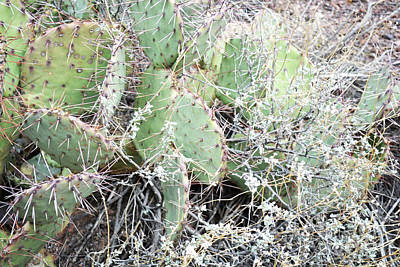 Poster featuring the photograph New Mexico Green Prickly Pear Cactus by Andrea Hazel Ihlefeld