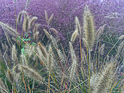 New Mexico High Desert Spring Grasses Poster by Wick Beavers