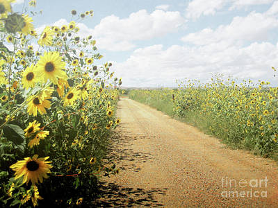 Poster featuring the photograph New Mexico Sunflower Road by Andrea Hazel Ihlefeld