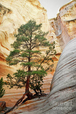 New Mexico Tent Rocks Slot Canyon Tree Landscape Poster by Andrea Hazel Ihlefeld
