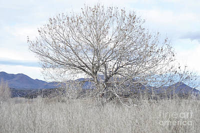 Poster featuring the photograph New Mexico Tree Mountain Landscape by Andrea Hazel Ihlefeld