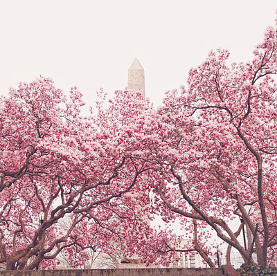 New York City - Springtime Cherry Blossoms Central Park Poster by Vivienne Gucwa