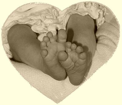 Newborn Feet Poster by Ellen O'Reilly