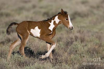 Newborn Mustang Poster by Jean-Louis Klein & Marie-Luce Hubert